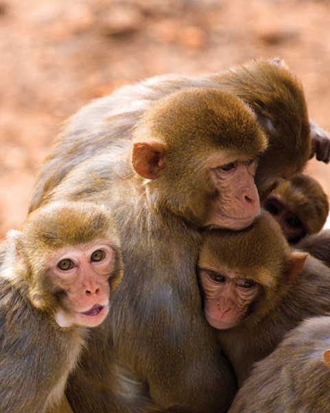 Illustrative photo of monkeys